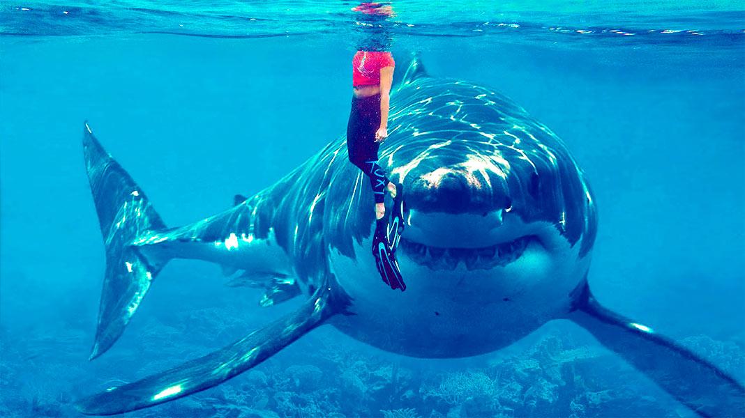 Tiburón vegetariano: un increíble descubrimiento que se ríe de la cadena alimentaria