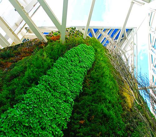 Vista del Jardín vertical El Farro Verde de la Torre de Cristal