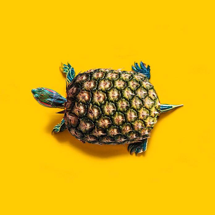 Tortapple (Les Creatonautes)