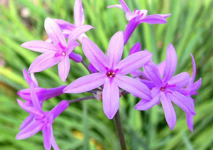 Plantas para jardines verticales las mejores variedades for Plantas usadas para jardines verticales
