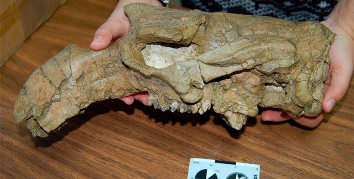 La vaca marina que vivió en Huesca hace 42 millones de años.