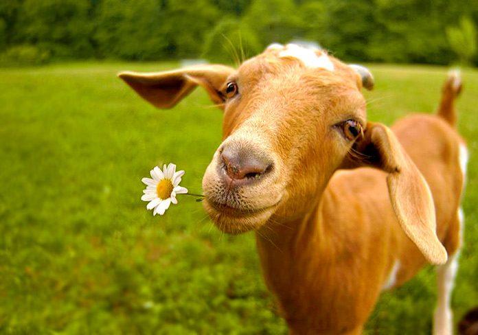 Veganuary: la última campaña vegana que ha ganado 250,000 nuevos adeptos