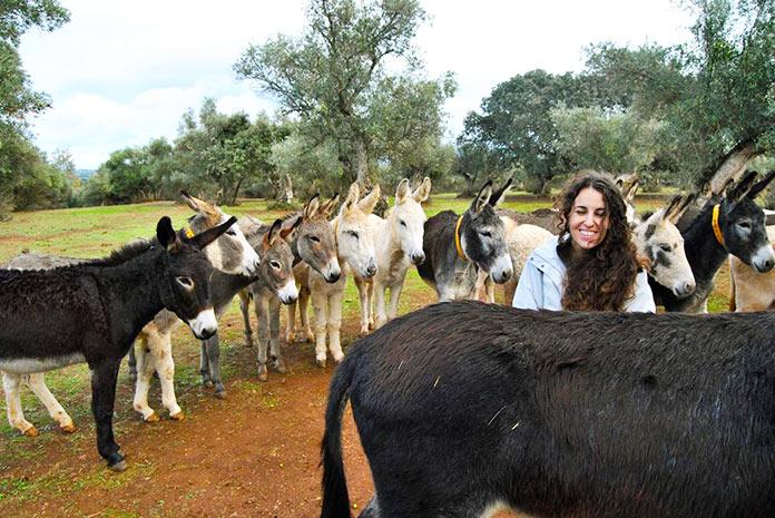 Visita guiada con los 76 burros y mulos rescatados del Refugio el Burrito