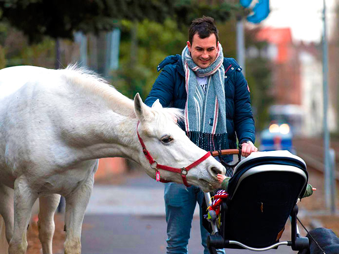 La yegua saluda a un bebé en cochecito